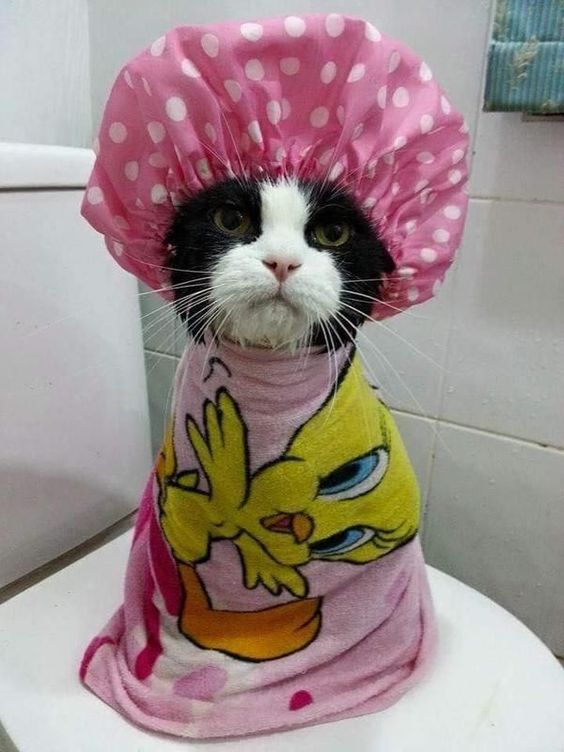 petsayhi_cat_unlike_shower1